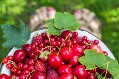 Groseilles de cerises de bol de fruit pleines Photographie stock