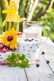 Groseilles de fruit de cocktails de jardin de ressort Images libres de droits