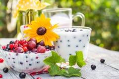 Groseilles de fruit de cocktails de jardin de ressort Images stock