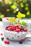 Groseilles de fruit de cocktails de jardin de ressort Photo libre de droits