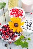 Groseilles de fruit de cocktails de jardin de ressort Image stock