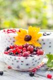 Groseilles de fruit de cocktails de jardin de ressort Photographie stock libre de droits