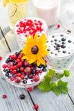 Groseilles de fruit de cocktails de jardin de ressort Photos stock