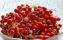 Groseilles rouges photo stock