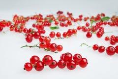 Groseilles rouges Images stock