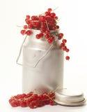 Groseilles rouges Photos libres de droits