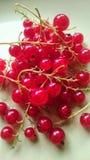 Groseilles rouges Image libre de droits