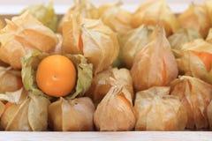 A groselha de cabo, colheitas marrons do outono com uma divulga a folha para ver o fruto Imagem de Stock