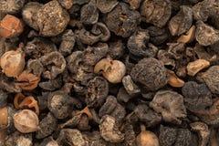 Groselha indiana secada orgânica (emblica de Phyllanthus) Imagens de Stock Royalty Free
