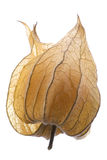 Grosella espinosa de cabo aislada Imagen de archivo libre de regalías