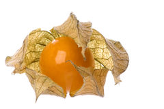 Grosella espinosa de cabo aislada Foto de archivo