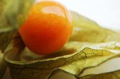 Grosella espinosa de cabo (Physalis) Imagenes de archivo