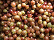 Grosella espinosa roja Foto de archivo libre de regalías