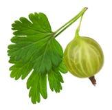 Grosella espinosa verde foto de archivo libre de regalías