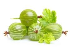 Grosella espinosa verde madura con la hoja aislada Imagen de archivo libre de regalías