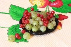Grosella espinosa y pasa roja Imagen de archivo libre de regalías
