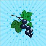 Grosella negra en un fondo azul, líneas, puntos Mano dibujada en arte pop del estilo Ilustración del vector Comida de Eco Foto de archivo