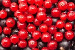 Grosella roja y negra Imagen de archivo libre de regalías
