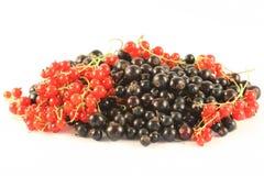 Grosella roja y negra. Imagenes de archivo