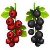 Grosella roja y negra con las hojas Fotografía de archivo libre de regalías
