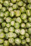 Grosellas espinosas orgánicas verdes de las bayas Fondo maduro de la grosella espinosa Fotos de archivo libres de regalías