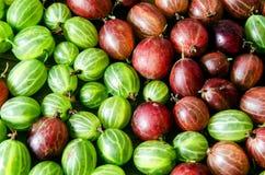 Grosellas espinosas rojas y verdes Fotografía de archivo