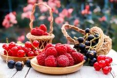 Grosellas frescas de las frambuesas de la baya del jardín, rojas y negras Bayas frescas en platos de madera Imagenes de archivo