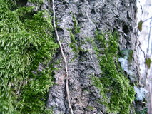 Grosplan centré écorce arbre Royalty-vrije Stock Foto's