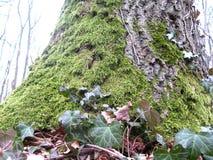 Grosplan centré tronc arbre Royalty-vrije Stock Afbeeldingen
