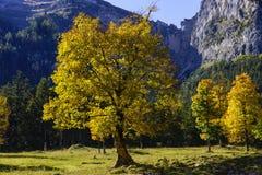 Grosser Ahornboden, Tirol, Austria Zdjęcie Stock