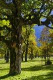 Grosser Ahornboden, Tirol, Austria Zdjęcia Royalty Free