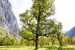 Grosser Ahornboden, Tirol, Austria Fotografia Royalty Free