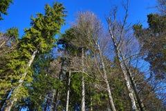 Grosser Arber See, Winter landscape around Bayerisch Eisenstein, ski resort, Bohemian Forest (Åumava), Germany Stock Images
