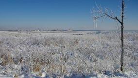 Grossraeschen lake in Winter stock footage