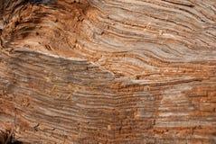 groszkowaty drewno Zdjęcie Royalty Free
