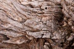 groszkowaty drewno Zdjęcie Stock