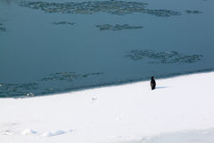 Grote aalscholver op ijs Royalty-vrije Stock Fotografie