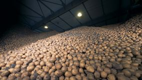 Grote aardappelopslag, bodemmening Stapels van aardappels in een pakhuis stock videobeelden
