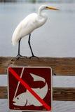 Grote aigrette die zich boven geen visserijteken bevinden Royalty-vrije Stock Foto