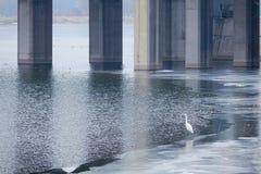 Grote Aigrette en brug royalty-vrije stock afbeeldingen