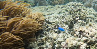 Grote Astrolabe Coral Reef: Dravunieiland stock foto's