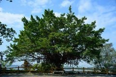Grote banyan boom en hemel Royalty-vrije Stock Foto's