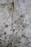 Grote Barst in Oude Muur Stock Afbeeldingen
