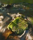 Grote bemoste kei in water van bergrivier. Ontruim vaag water met bezinningen. Ravijn behandelde beuken en esdoorn tre stock afbeelding