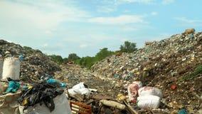 Grote bergen van huisvuil in Vietnam Koeien die huisvuil eten bij het huishoudelijke afval van de huisvuilstortplaats stock videobeelden