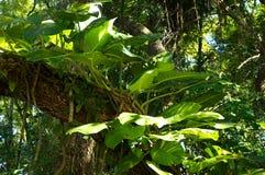 Grote bladinstallatie op boom Stock Foto