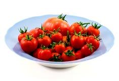 Grote blauwe plaat met rode geïsoleerde tomaten Royalty-vrije Stock Foto