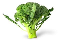Grote bloeiwijzen van verse broccoli met bladeren Royalty-vrije Stock Afbeeldingen