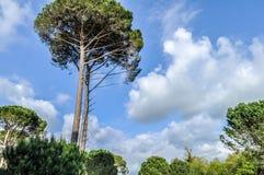 Grote bomen royalty-vrije stock afbeeldingen