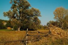 Grote bomen achter de oude houten omheining Royalty-vrije Stock Afbeelding